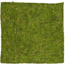 Plaque de mousse véritable, 35 x 35 cm