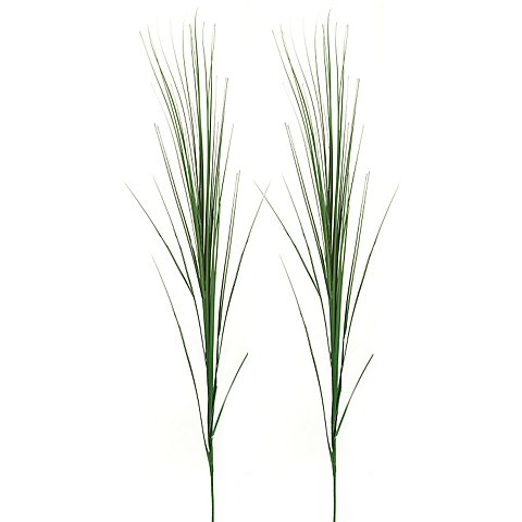 Image of Ziergras, 70 cm, 2 Stück