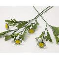 """Blumenstiel """"Margerite"""", 56 cm"""