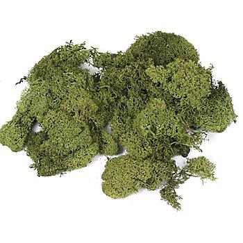 Mousse d'Islande, vert, 100 g