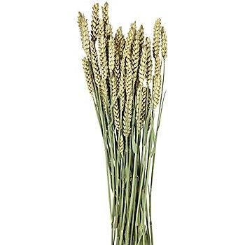 Weizenähren, grün, 100 g
