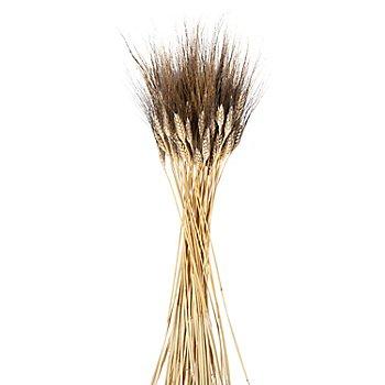 Epis d´orge, à barbes dorées, 100 g