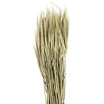 Gerstenähren, grün, 100 g