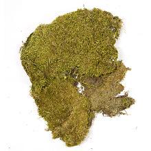 Plaques de mousse véritable, 100 g