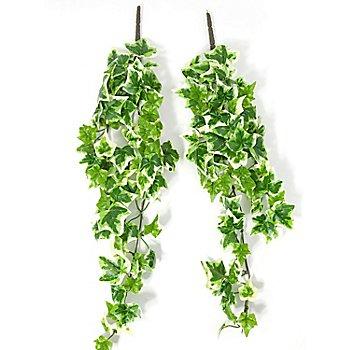 Branches de lierre, vert/blanc