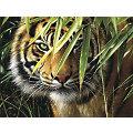 """Kit peinture aux numéros """"tigre"""", 40 x 30 cm"""