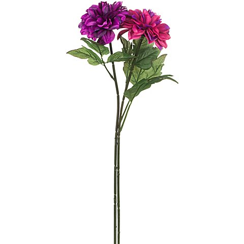 Image of Dahlien, lila-pink, 65 cm, 2 Stück