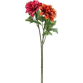 Dahlien, weinrot-terrakotta, 65 cm, 2 Stück