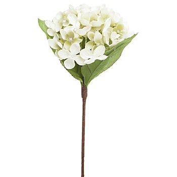 Hortensie, creme, 28 cm