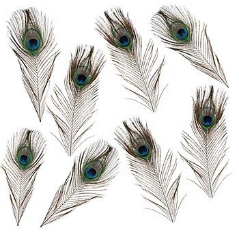 Plumes de paon véritables, 15 - 20 cm, 8 pièces