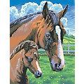 """Malen nach Zahlen mit Acrylfarben """"Pferde"""", 23 x 30,5 cm"""