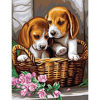 Malen nach Zahlen mit Acrylfarben 'Hunde im Korb', 23 x 30,5 cm