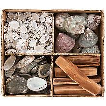 Set coquillages et bâtons de bois flotté, 1-10 cm