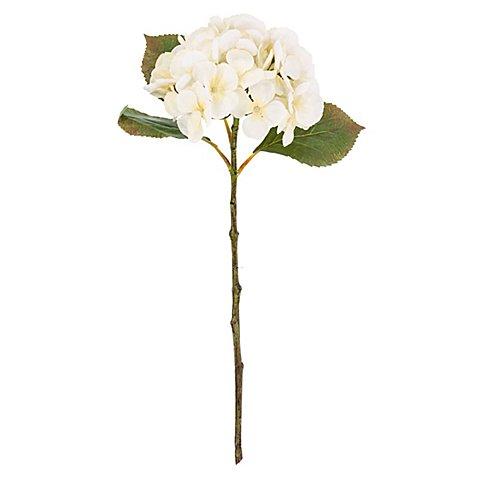 Image of Hortensie, creme, 45 cm