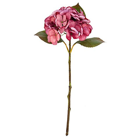 Image of Hortensie, rose, 45 cm