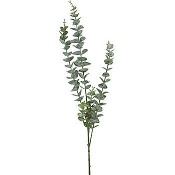 Eukalyptus-Zweig, 80 cm