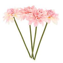 Dahlien, rosa, 19 cm, 4 Stück
