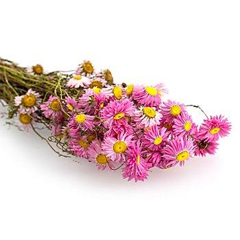 Trockenblumen Acroclinium, hellrosa