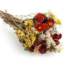 Trockenblumenbouquet, rot-gelb