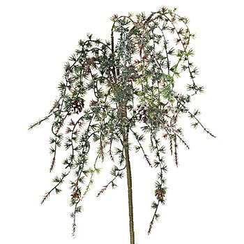 Frostlärchenzapfen-Zweig, 75 cm