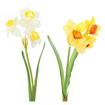 Narcisses, jaune/blanc, 35 cm