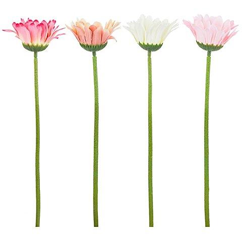 Image of Gerbera, weiss-apricot-rosa-dunkelrosa, 28 cm, 4 Stück