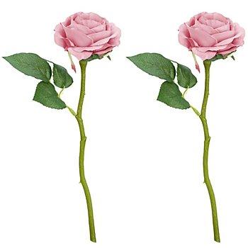 Roses, vieux rose, 30 cm