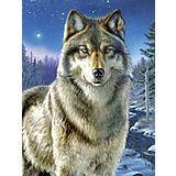 """Malen nach Zahlen mit Acrylfarben, """"Wolf"""", 23 x 30,5 cm"""
