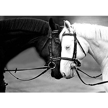 Diamantenstickerei-Set 'Pferde', 38 x 27 cm