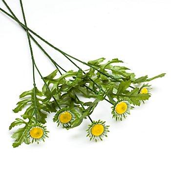 Blumenstiel 'Margerite'