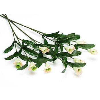 Blumenstiel 'Spraynelke'