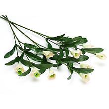 Tiges 'oeillets multiflores (spray)', 52 cm