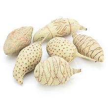 Mélange de fruits 'Afrique', vert clair/marron, 14 - 17 cm, 6 pièces