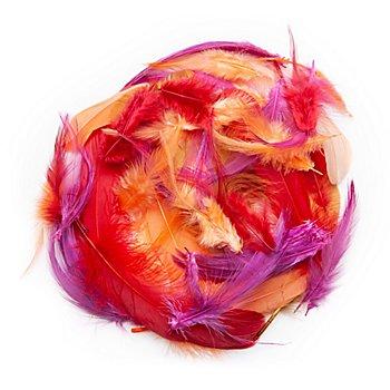 Plumes véritables 'Orient', multicolore, 8 g = env. 100-110 plumes