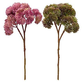 Sedum-Pick, rosa-grün, 20 cm, 2 Stück