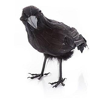 Corbeau, noir