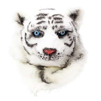 Tête de tigre blanc
