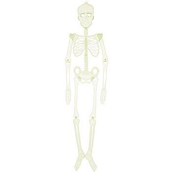 Bewegliches Skelett, nachtleuchtend, 92 cm